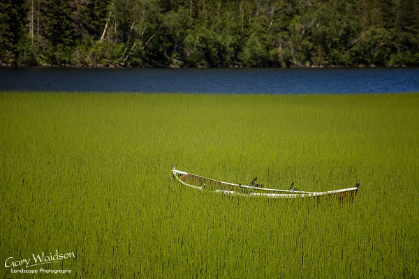 Boat in reeds. Norway. Fine Art Landscape Photography by Gary Waidson