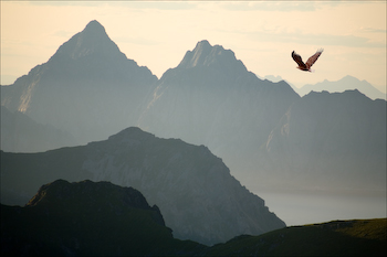 A sea eagle over the peaks of Lofoten.