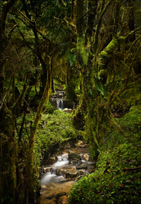 Caledonian Rainforest